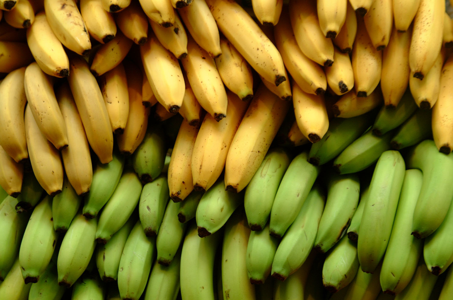 Bananas_EarthTalk