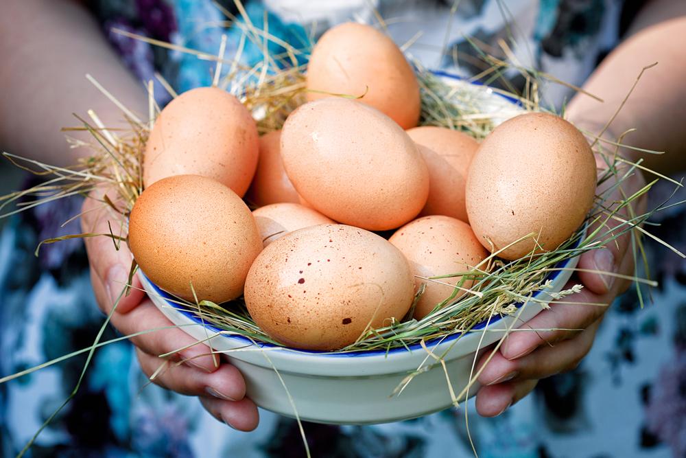 яйцаpy