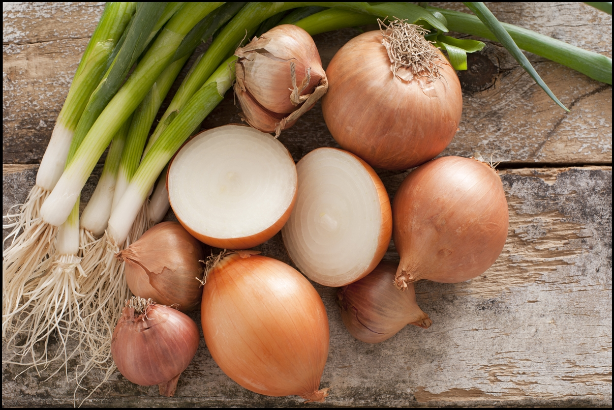 Fun-Facts-of-Onions-2
